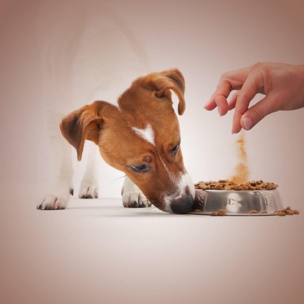 Barkumin for dog's good health