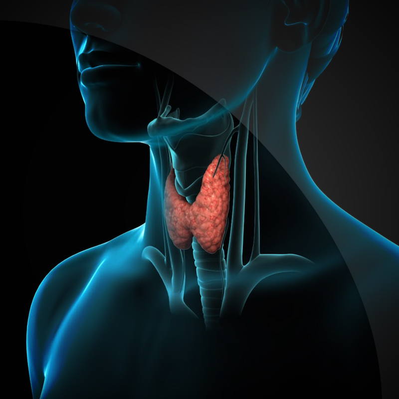 A Natural Healer for Thyroid Related Diseases -Thyromeric