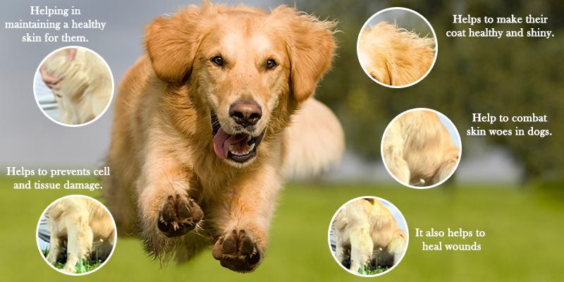 Barkumin for skin diseases treatment in dogs