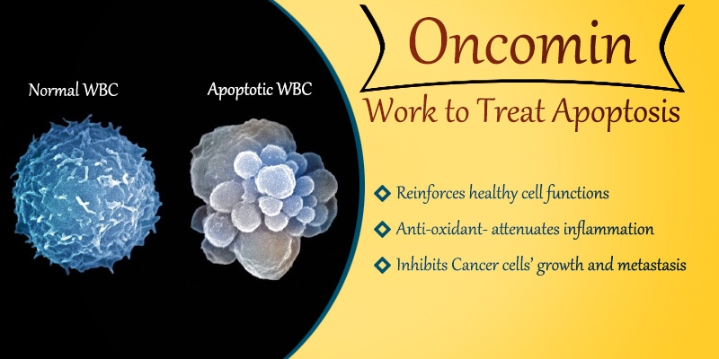 Oncomin works to treat apoptosis naturally