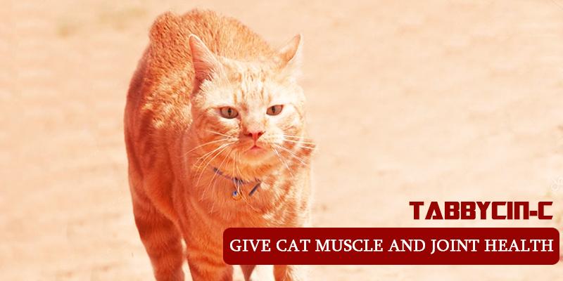 Tabbycin-C to treat arthritis in cats