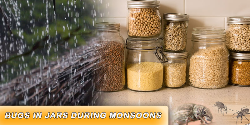 bugs in jars during monsoons